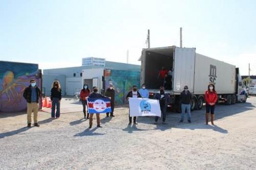 Sindicatos de buzos mariscadores de Caldera realizan primera exportación de ostiones con destino a España