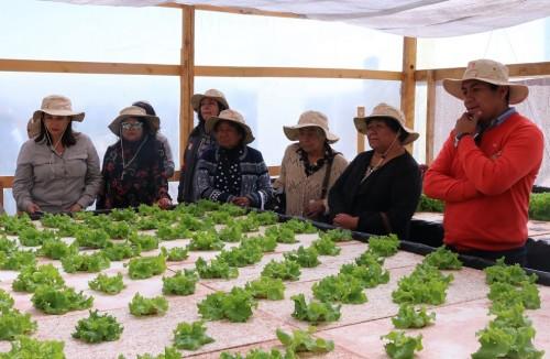 Exitosa culminación de los Fondos Emprende Lomas Oasis de Calama 2018